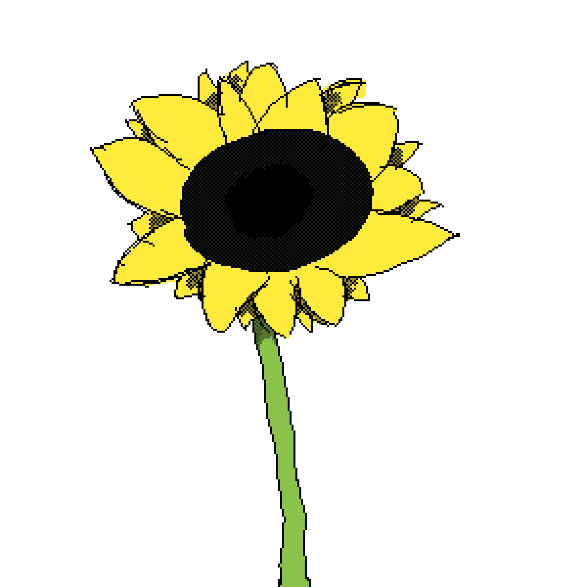 Sunflower by mehdude