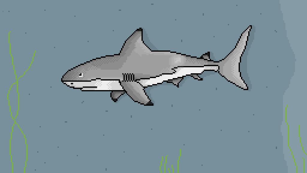 belo shark by Diehlg