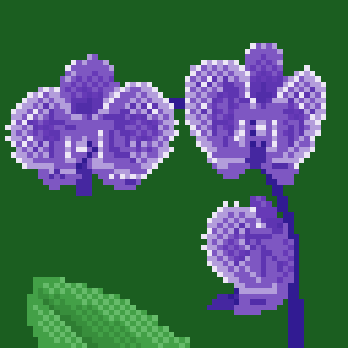 Purple Orchids by 6hexagon6