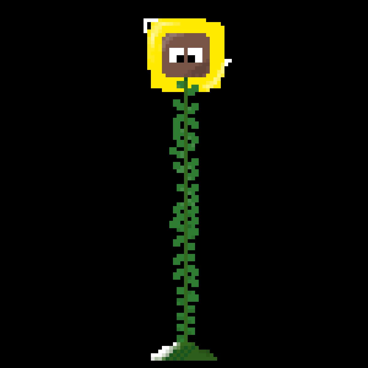 Sunflower Noob