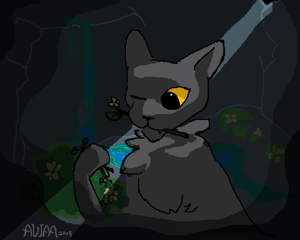 Medicine Cat