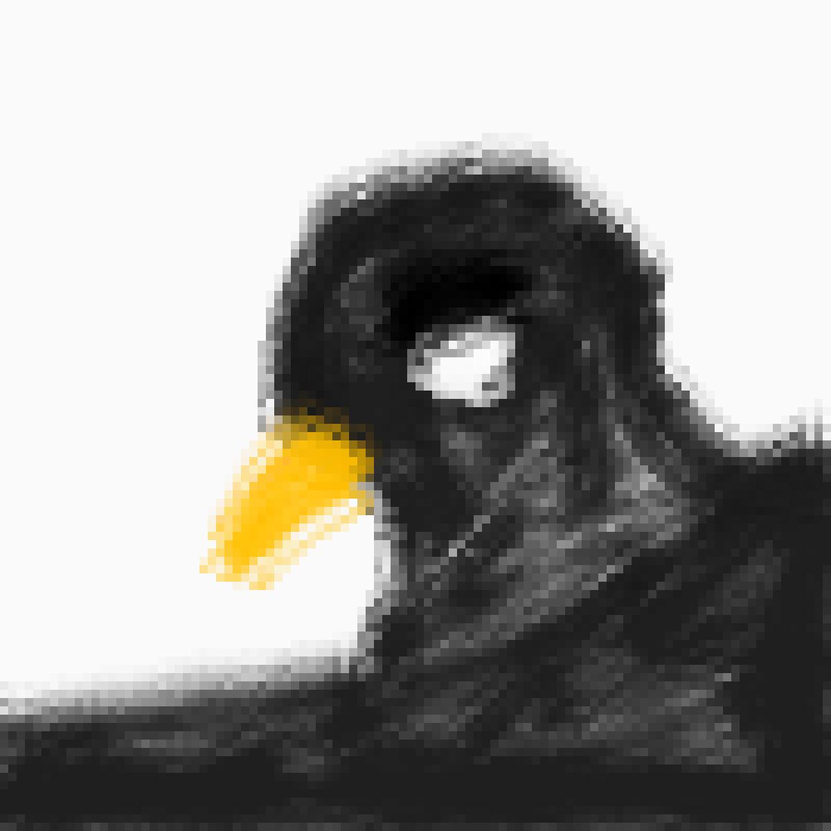 Black Bird by Bellablossom06