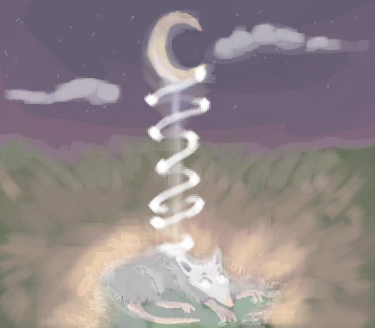 Lord Possum