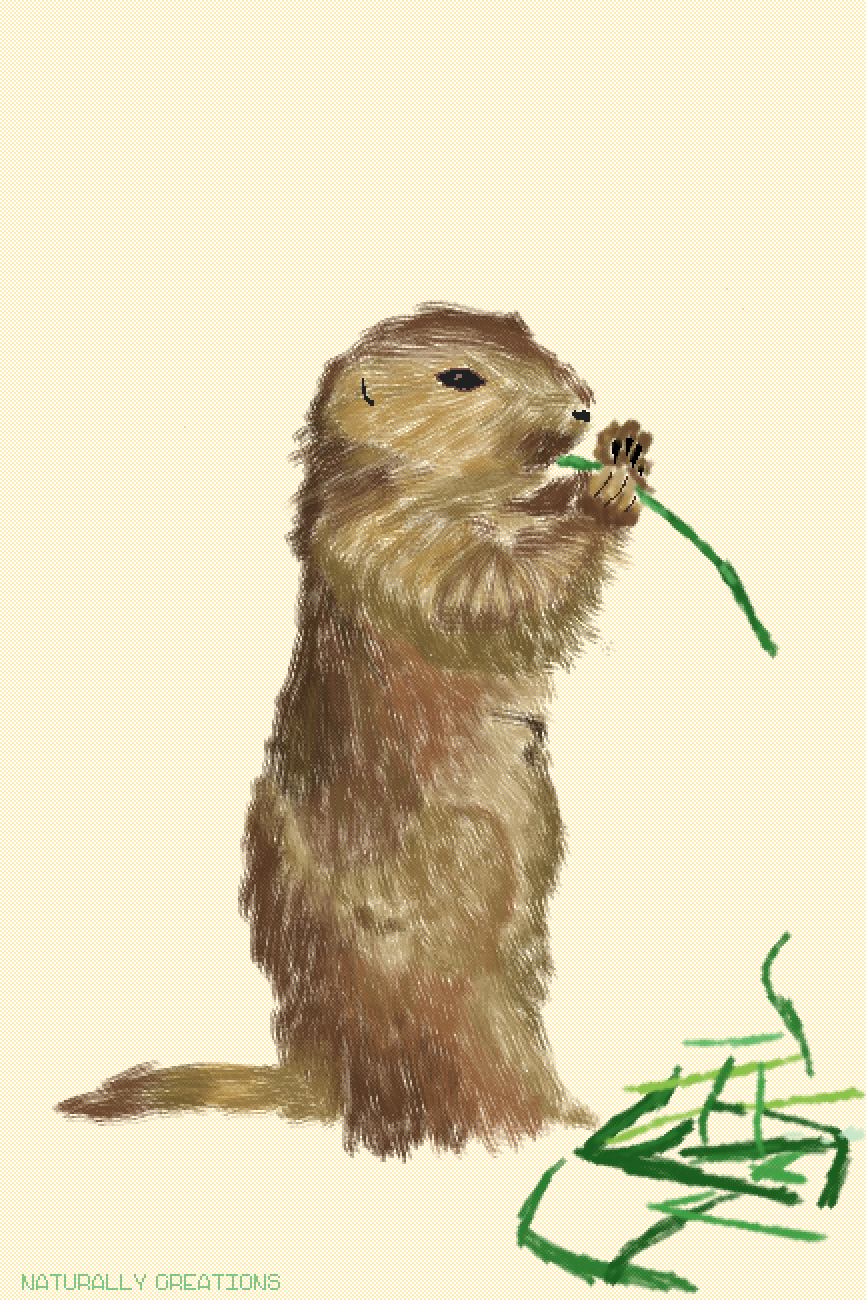 a marmot eating grass