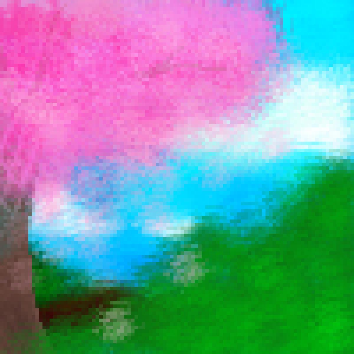 Sakura Road by StarryGirl