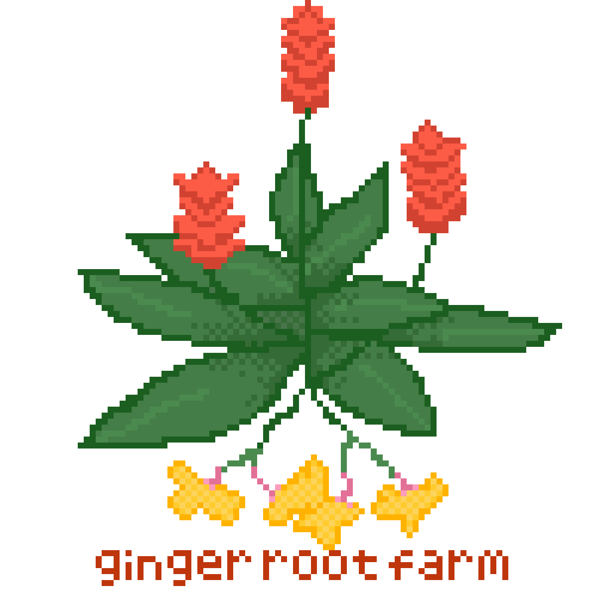 ginger root farm logo by gingerrroot