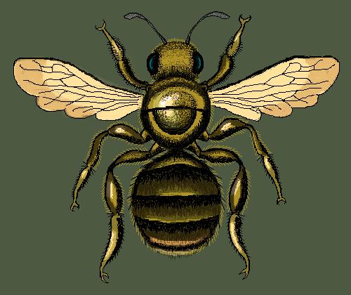 Bee 13.03.19