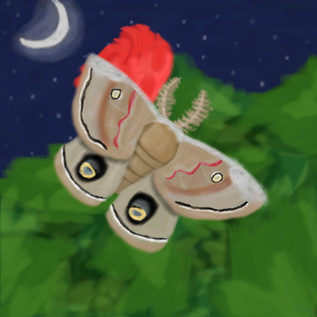 The Polyphemus Moth