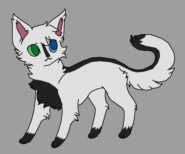 my bfs cat