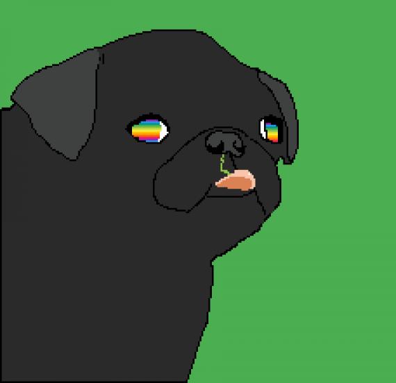 A beautiful pug