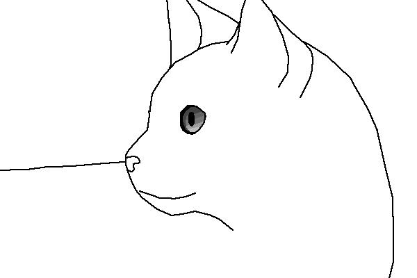 Cat gazing into distance