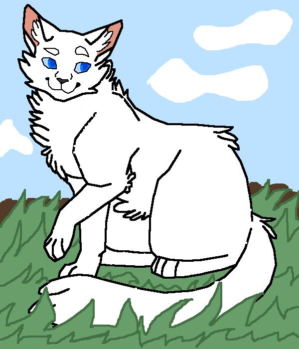 Cat Base