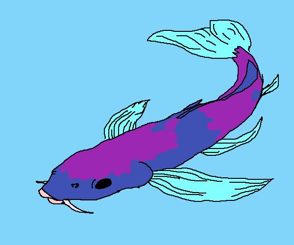 koi fish base