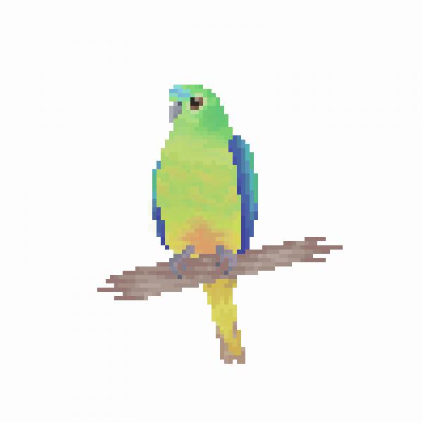Orange-Bellied Parrot ( Neophema Chrysogaster )