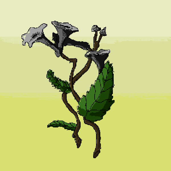 Craterellus cornucopioides (-Trumpet of the Dead-) *Alc
