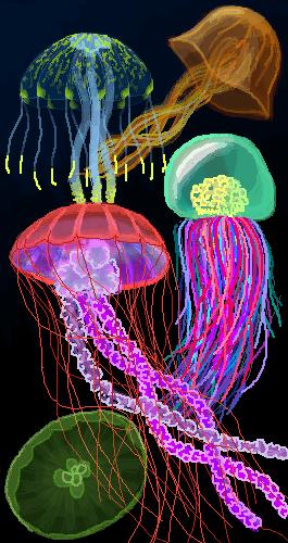 Jellyfish 23.03.19