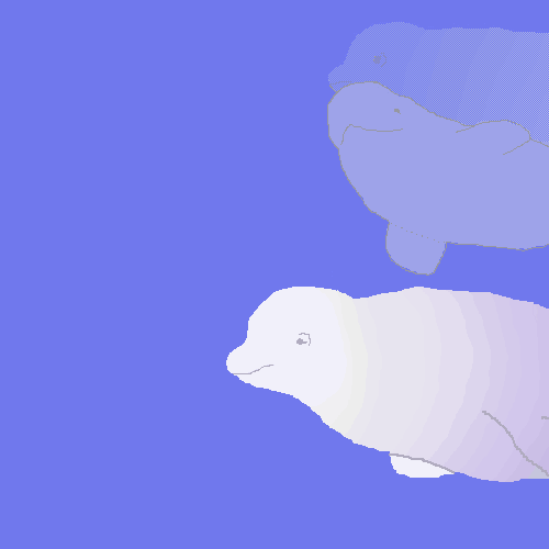 Curious Belugas